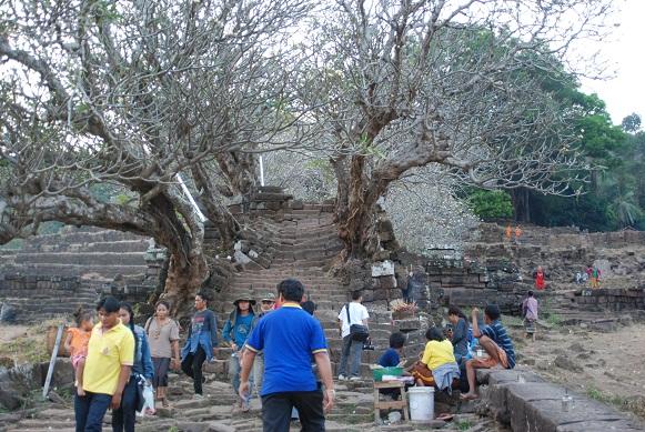 stairs and frangipani