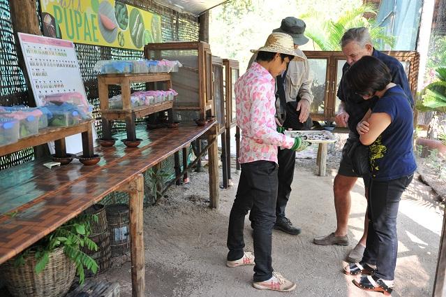 Pem showing pupae to visitors