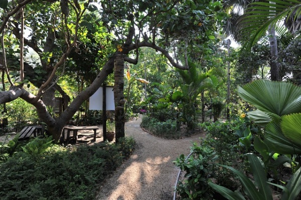 Angkor Butterfly Centre
