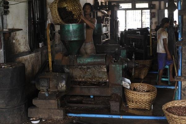 peanut factory