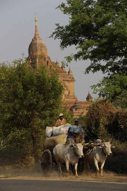 ox cart and temple
