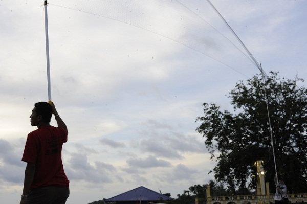 catching swiftlets