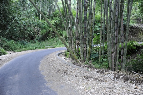 road and bamboos