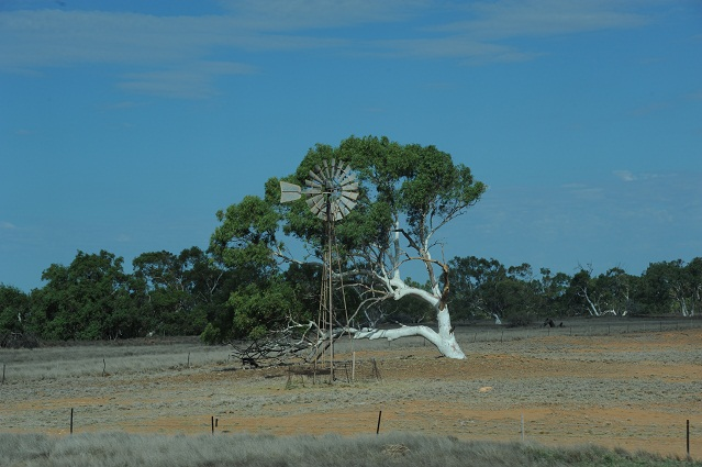 wind mill and white tree